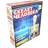 Исследовательский набор ND Play Скелет человека