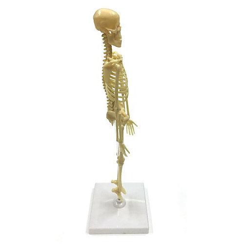 Исследовательский набор ND Play Скелет человека от ND Play