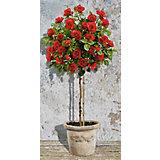 Картина по номерам Schipper Розовое дерево красное, 40х80 см