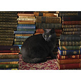 """Пазл Cobble Hill """"Библиотечный любимец"""", 1000 деталей"""