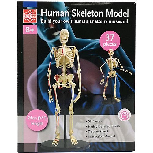 Анатомический набор Edu-Toys, 37 деталей от Edu-Toys