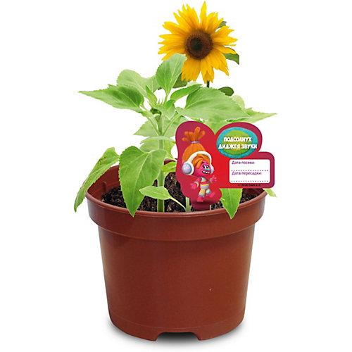 """Набор для выращивания Вырасти меня """"Сад Троллей"""" Подсолнух ДиДжей Звуки от Вырасти меня"""