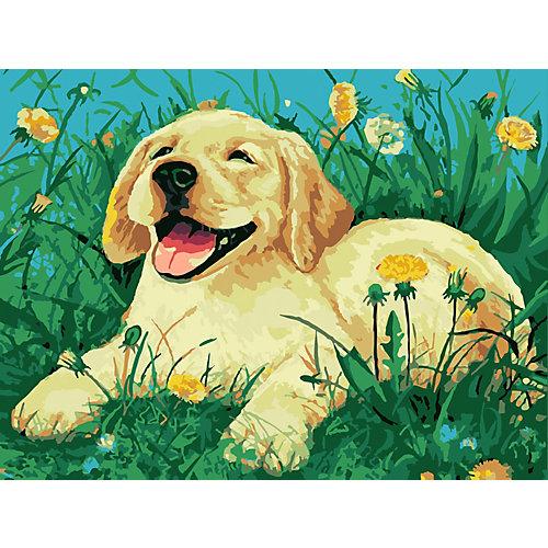 Картина по номерам Color KIT Пёс на лужайке от Color KIT