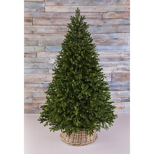 Можжевельник Triumph Tree, зеленый от Triumph Tree