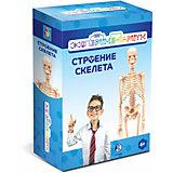 """Набор для опытов 1Toy """"Экспериментариум"""" Строение скелета"""