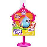 Птичка Little live pets Твитти-Радуга в скворечнике