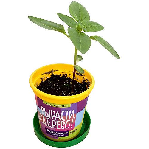 """Набор Вырасти дерево """"Подсолнечник"""" от Вырасти дерево"""
