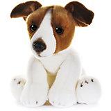 """Мягкая игрушка MaxiLife """"Собака Джек Рассел"""", 30 см"""