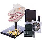 """Творческий набор """"Динозавр"""", Edu-Toys"""