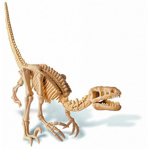 Скелет Велоцираптора, 4М
