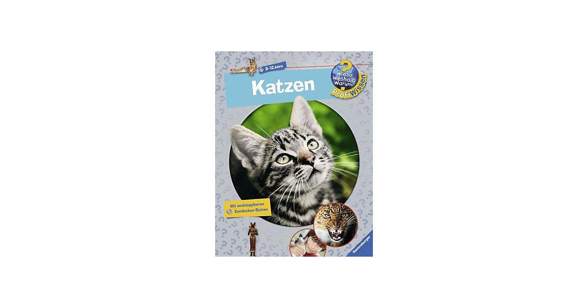 WWW Profiwissen: Katzen