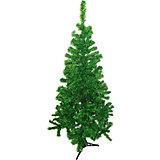 Ель зелёная, 150 см
