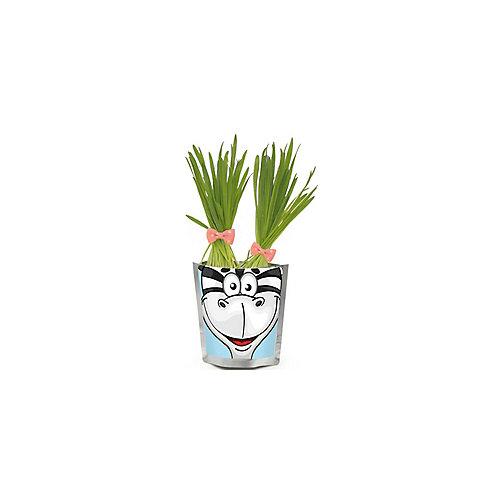"""Набор для выращивания """"Сафари"""" - Зебра Happy Plant от Бумбарам"""