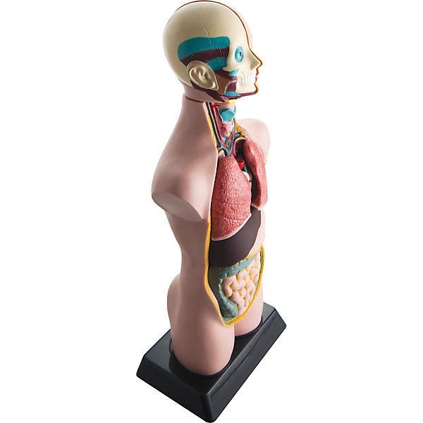 Анатомия человеческого тела EDU-TOYS