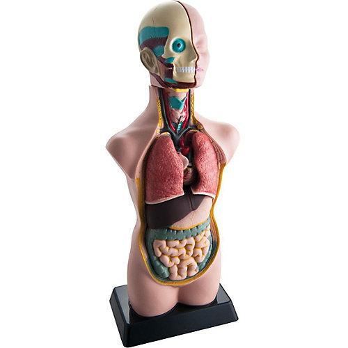 Анатомия человеческого тела EDU-TOYS от Edu-Toys