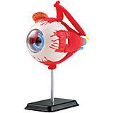 Анатомический набор (глаз) EDU-TOYS