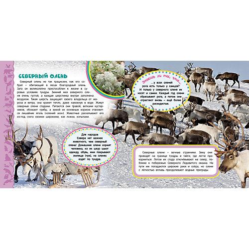 Полярные животные, Самая первая энциклопедия от Росмэн