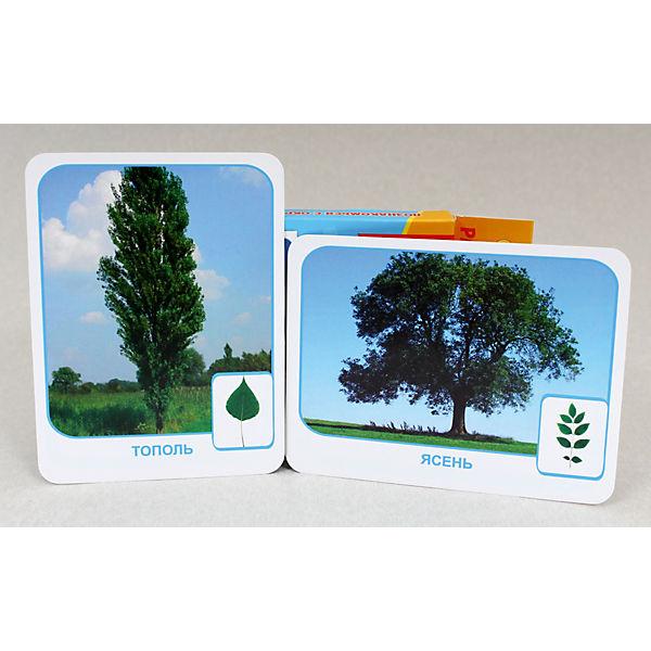 """Развивающие карточки """" Мои первые уроки. Природа"""""""