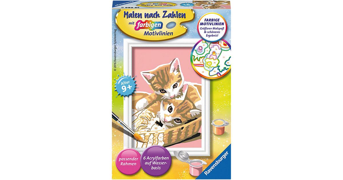 Malen nach Zahlen Serie F Katzenbabys