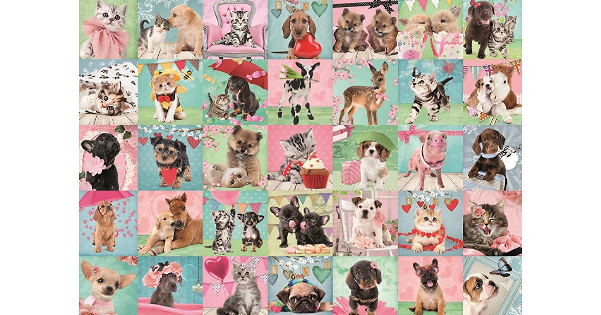 Puzzle 1000 Teile - Studio Pets