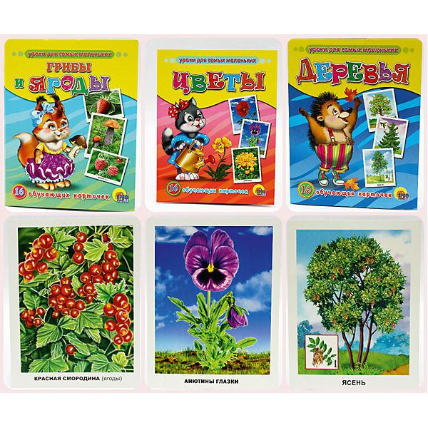 """Комплект из 3 наборов карточек """"Грибы и ягоды, Деревья, Цветы"""""""