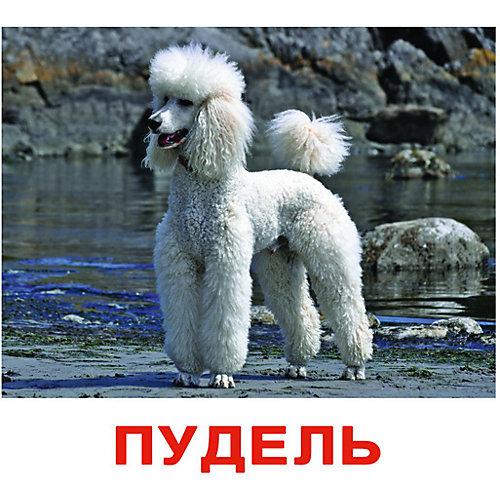 """Набор обучающих карточек Вундеркинд с пелёнок """"Породы собак"""" 20 штук от Вундеркинд с пелёнок"""