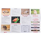 """Набор обучающих мини-карточек Вундеркинд с пелёнок """"Домашние животные"""" 40 штук"""