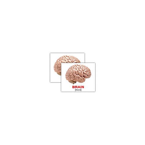 """Набор обучающих мини-карточек Вундеркинд с пелёнок """"Human/Человек"""", двухсторонний 40 штук от Вундеркинд с пелёнок"""