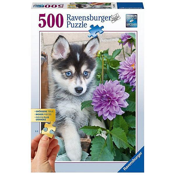 Puzzle 500 Teile, 61x46 cm, Gold Edition: größere Teile, Putziger Husky, Ravensburger