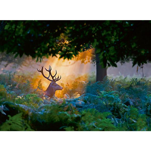 Пазл «Олень в лучах заходящего солнца» 500 шт
