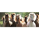 Пазл панорамный «Дикие лошади» 1000 шт