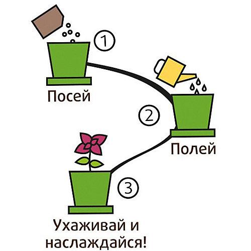 Набор для выращивания Мелисса лимонная от Happy Plant
