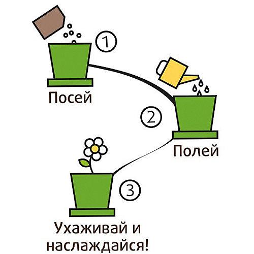 Набор для выращивания Подсолнух миниатюрный от Happy Plant