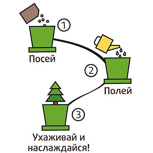 Набор для выращивания Ягоды Годжи от Happy Plant