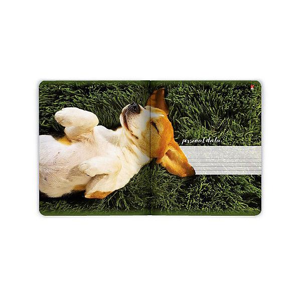 Тетрадь Альт Собаки. С ветерком 48 листов, 5 шт., клетка