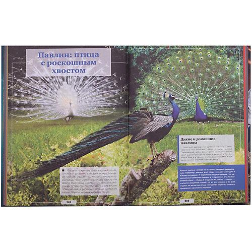 Гигантская детская энциклопедия с дополненной реальностью от Издательство АСТ