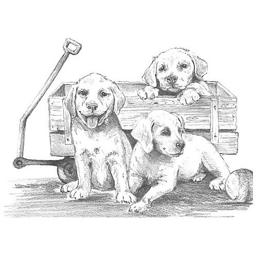 "Картина-эскиз по номерам карандашами Royal&Langnickel ""Щенки"", 28,5х39 см от Royal&Langnickel"