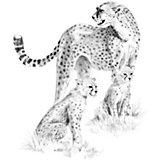 """Картина-эскиз по номерам карандашами Royal&Langnickel """"Леопарды"""", 22х29 см"""