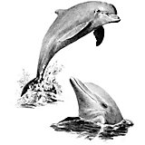 "Картина-эскиз по номерам карандашами Royal&Langnickel ""Дельфины"", 22х29 см"