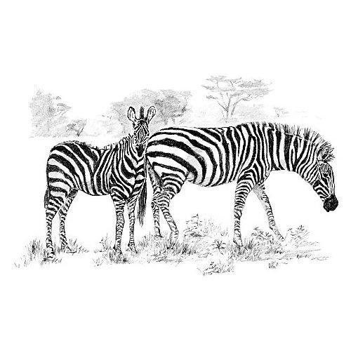 "Картина-эскиз по номерам карандашами Royal&Langnickel ""Зебры"", 28,5х39 см от Royal&Langnickel"
