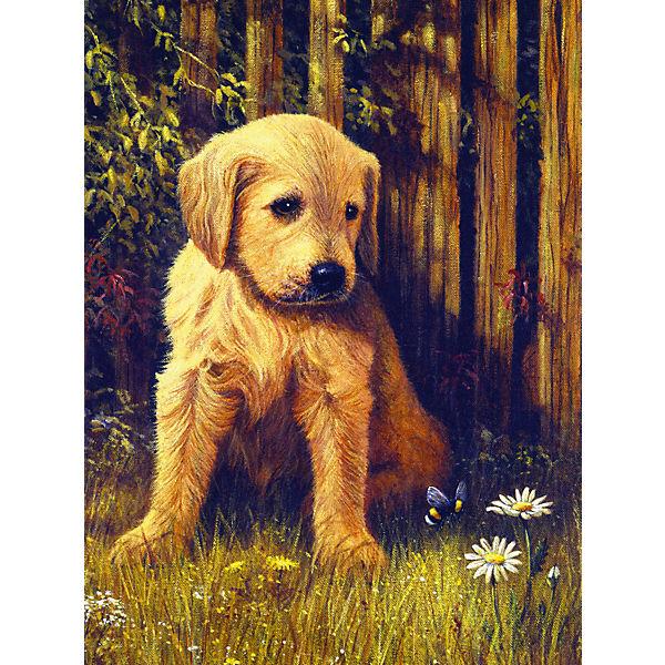 """Картина по номерам Royal&Langnickel """"Грустный щенок"""", 22х29 см"""