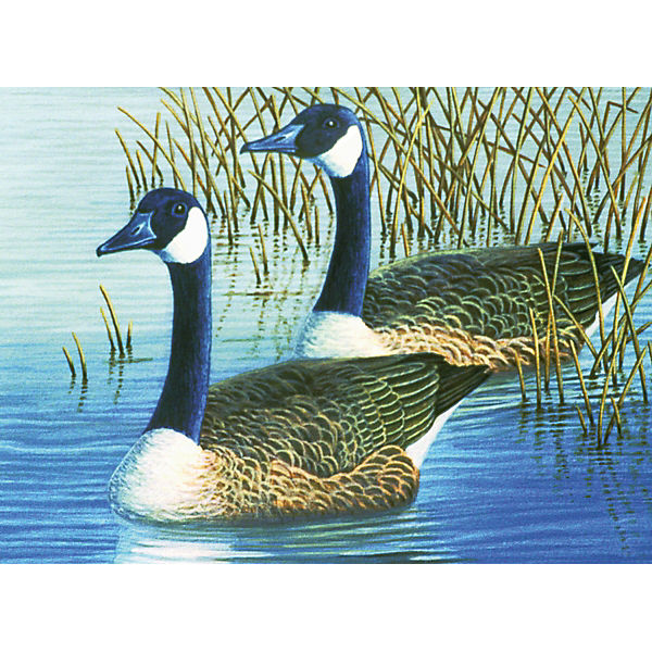"Картина по номерам Royal&Langnickel ""Гуси"", 28,5х35 см"