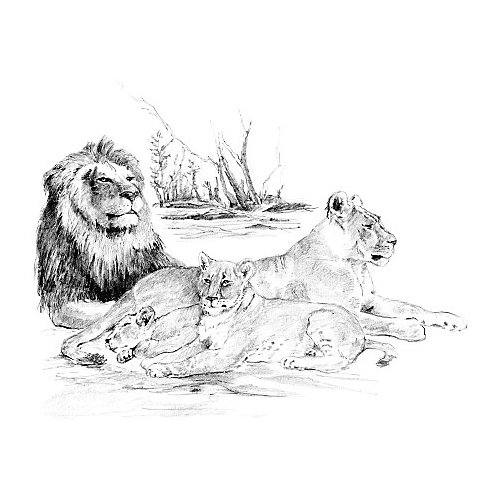 """Картина-эскиз по номерам карандашами Royal&Langnickel """"Львы"""", 28,5х39 см от Royal&Langnickel"""