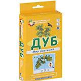 """Обучающие карточки """"Мир растений"""" Дуб"""