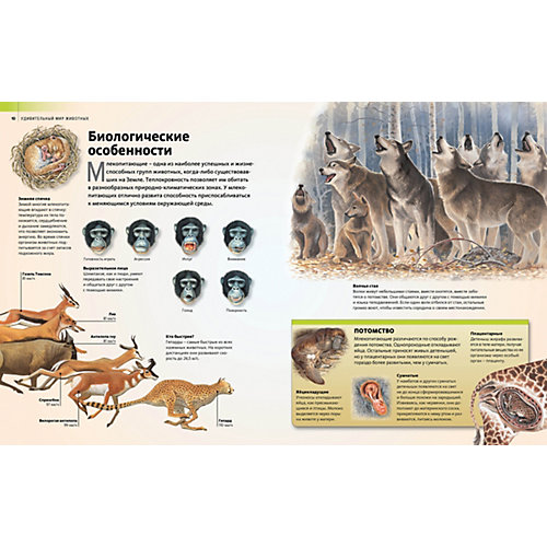 """Энциклопедия """"Discovery Education"""" Удивительный мир животных от Махаон"""