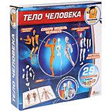 Анатомический набор Играем вместе Маленький учёный: тело человека