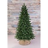 Ель стройная Triumph Tree Шервуд Премиум, 185 см